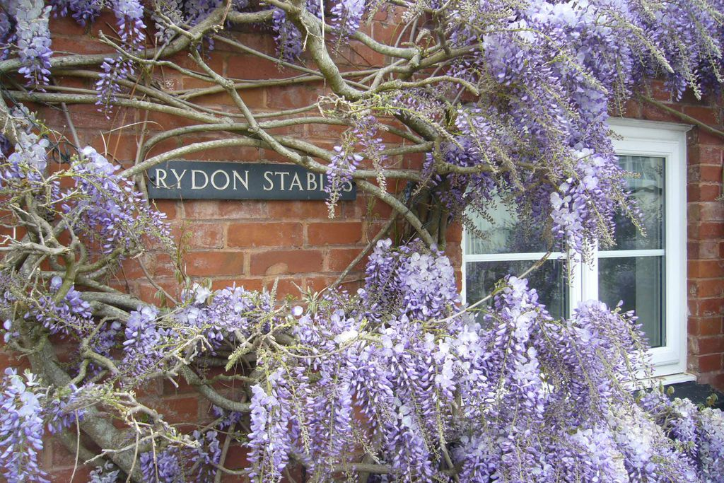 Rydon Stables - Gallery