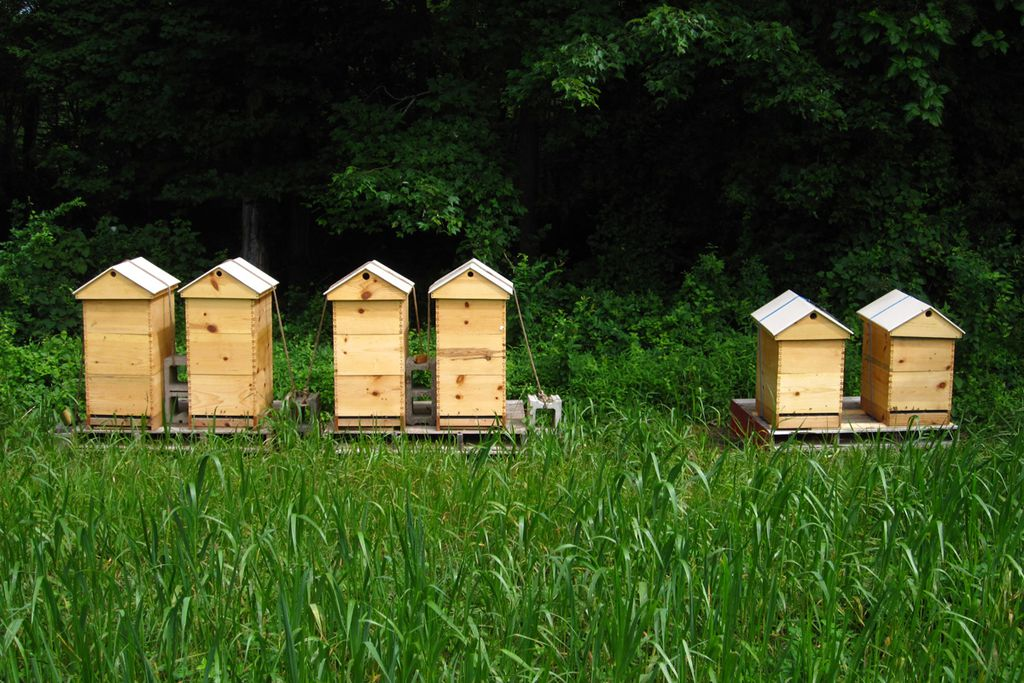 The Apiary - Gallery