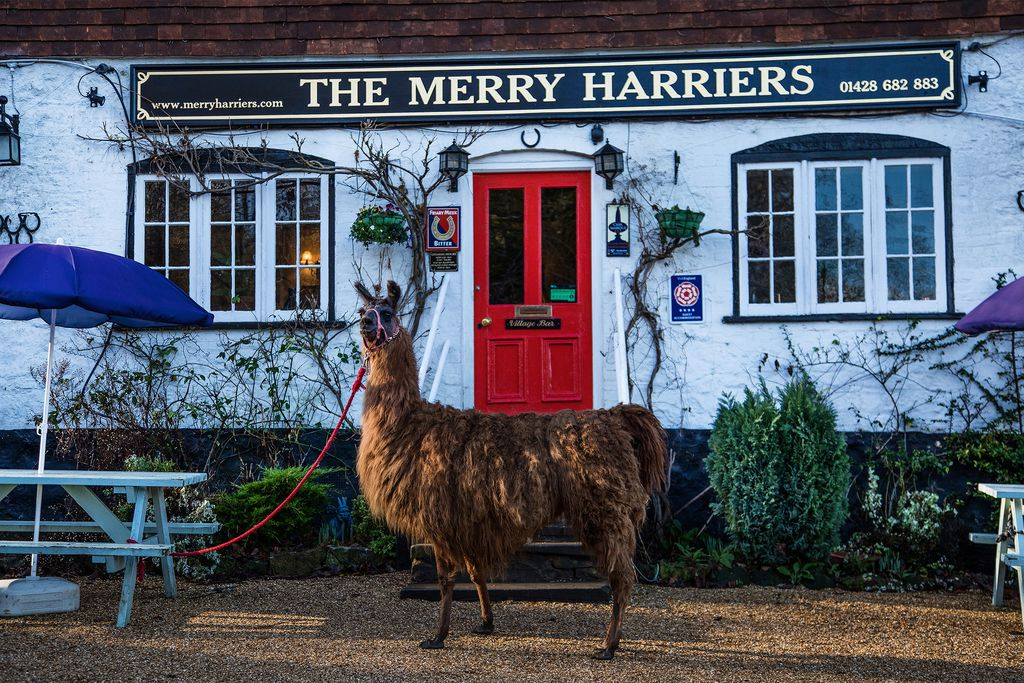 The Merry Harriers - Gallery