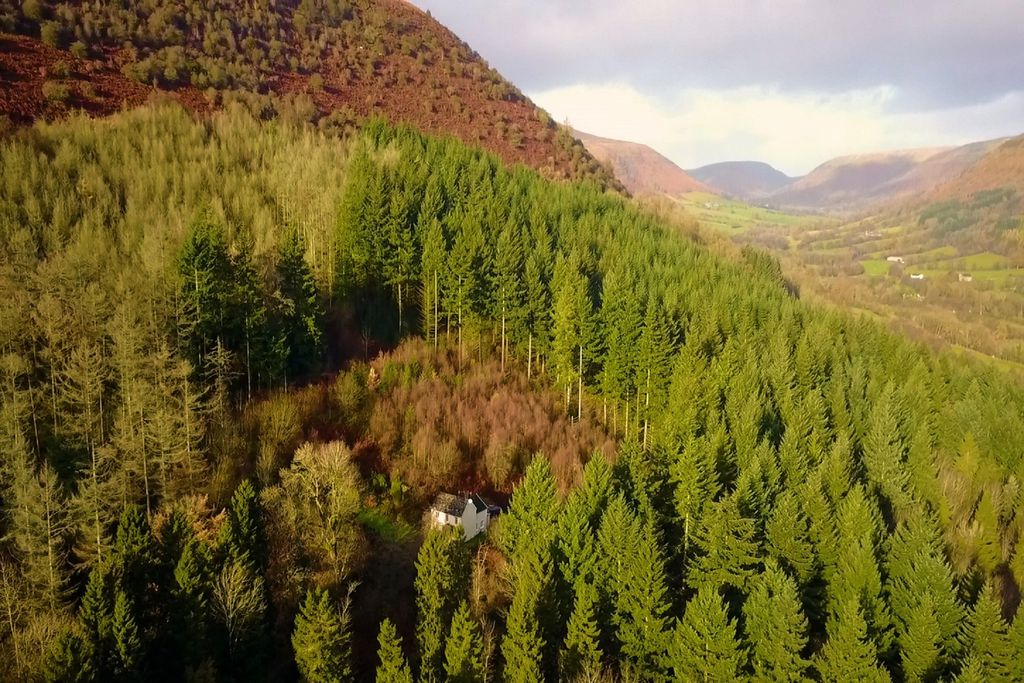 View of Graig Ddu - The Cottage in the Forest in Abergavveny, Monmouthshire from up high, set in the depths of the forest in truly stunning surroundings