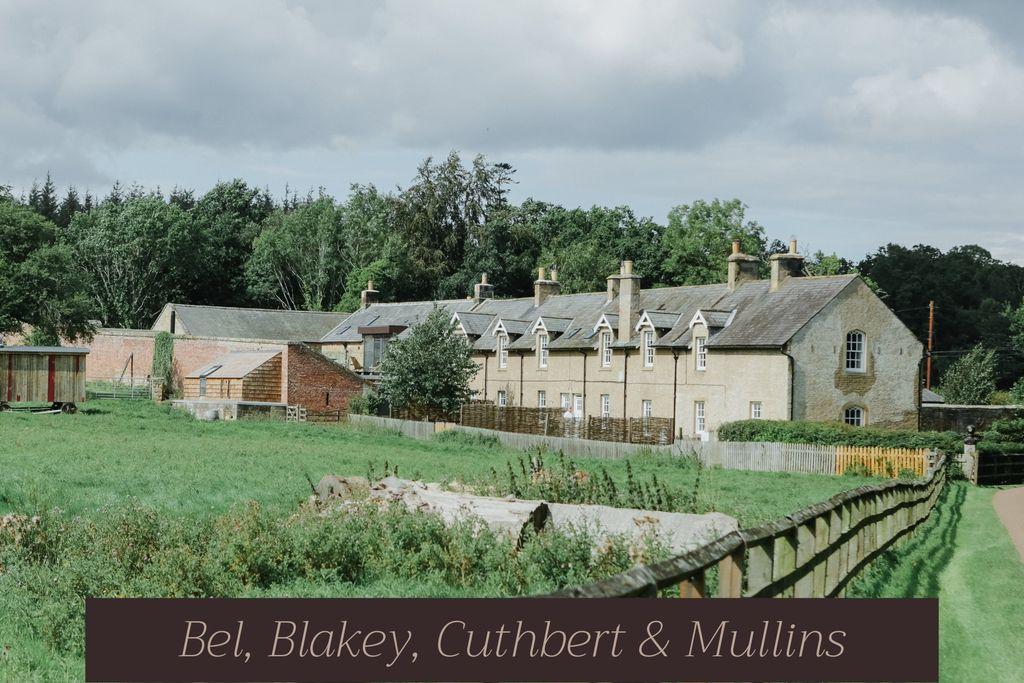 Mullins - Gallery