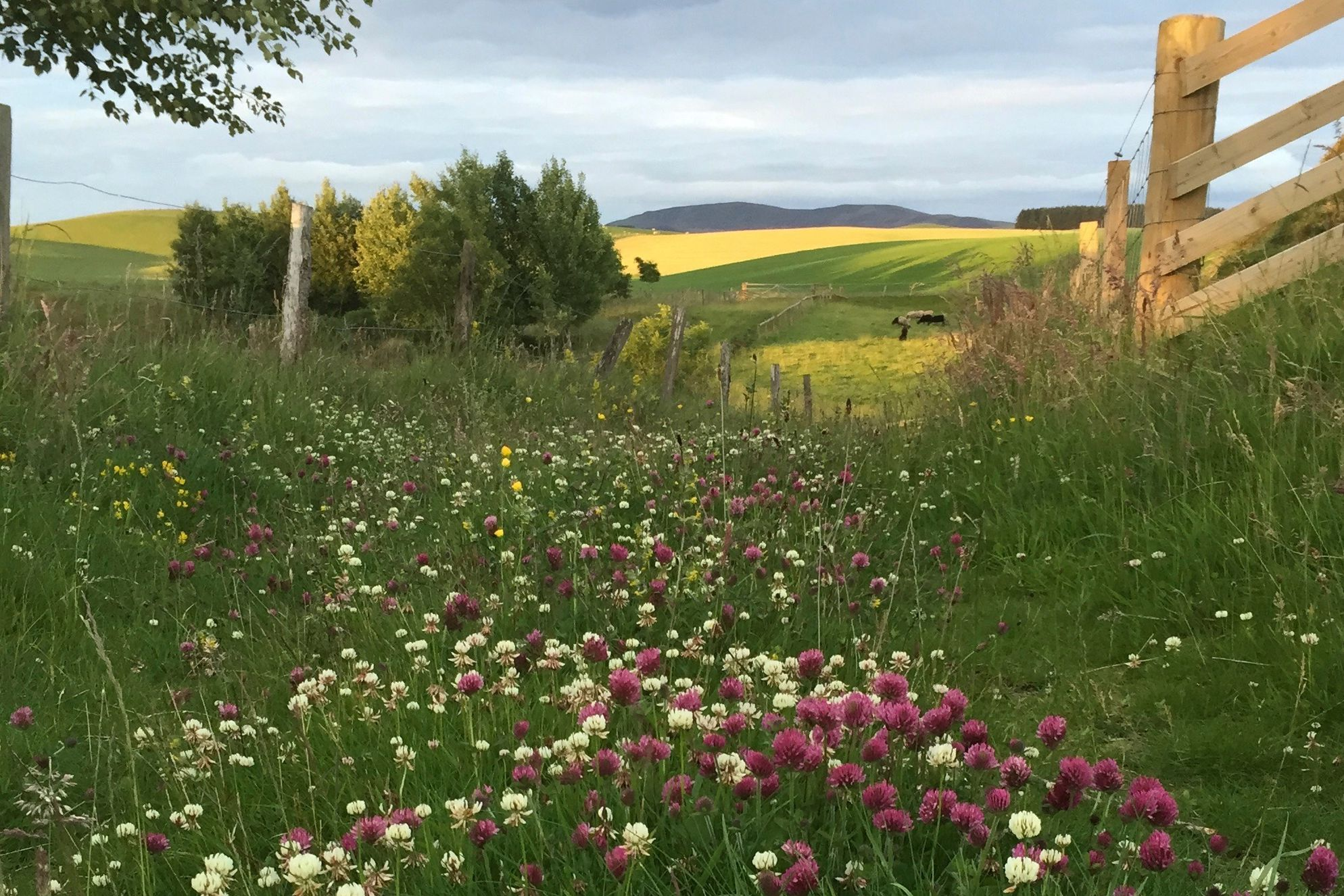 Footpath leading to surrounding countryside at The Lint Mill in Lanarkshire, with a view of rolling hills