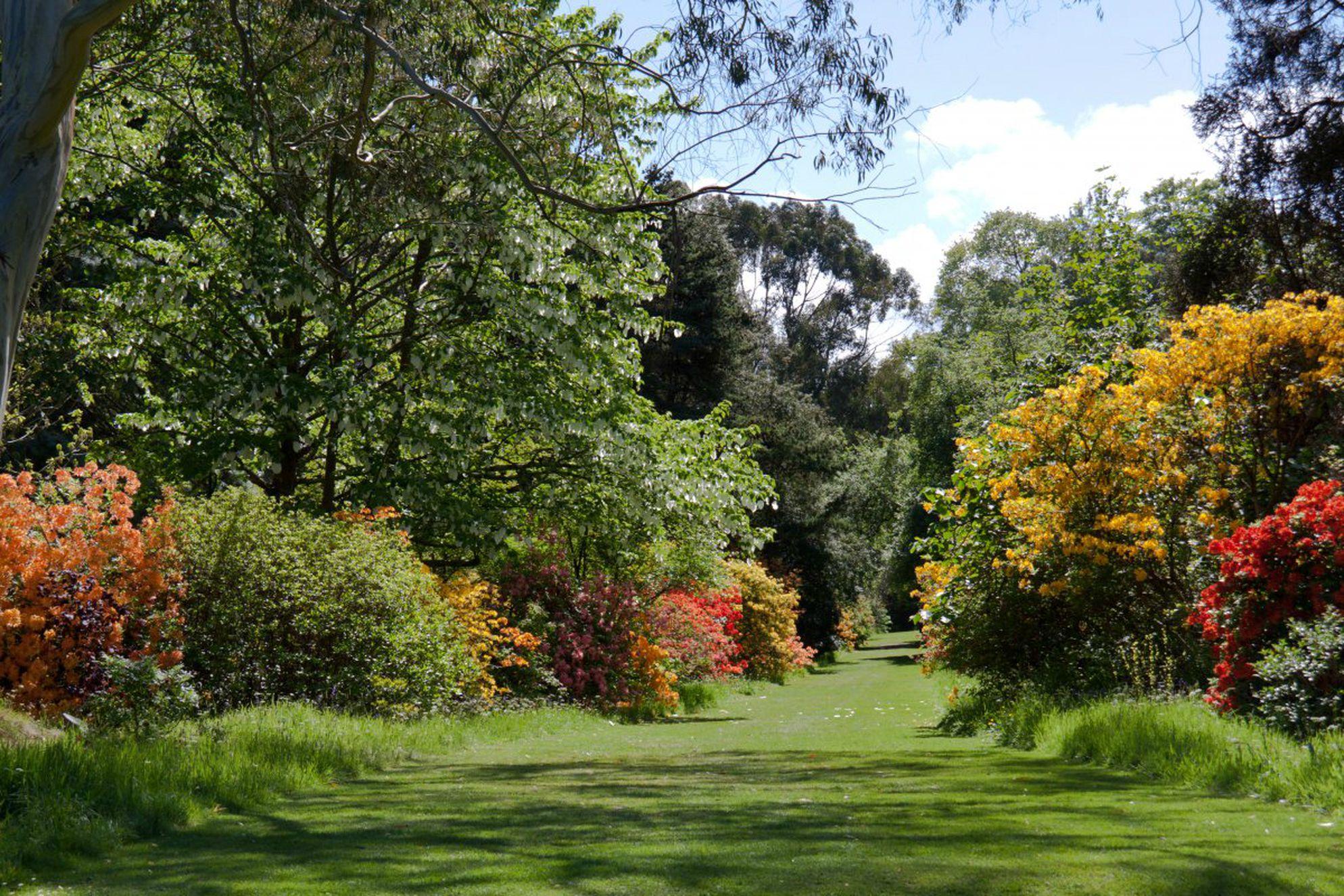 Mount Usher Gardens - Gallery