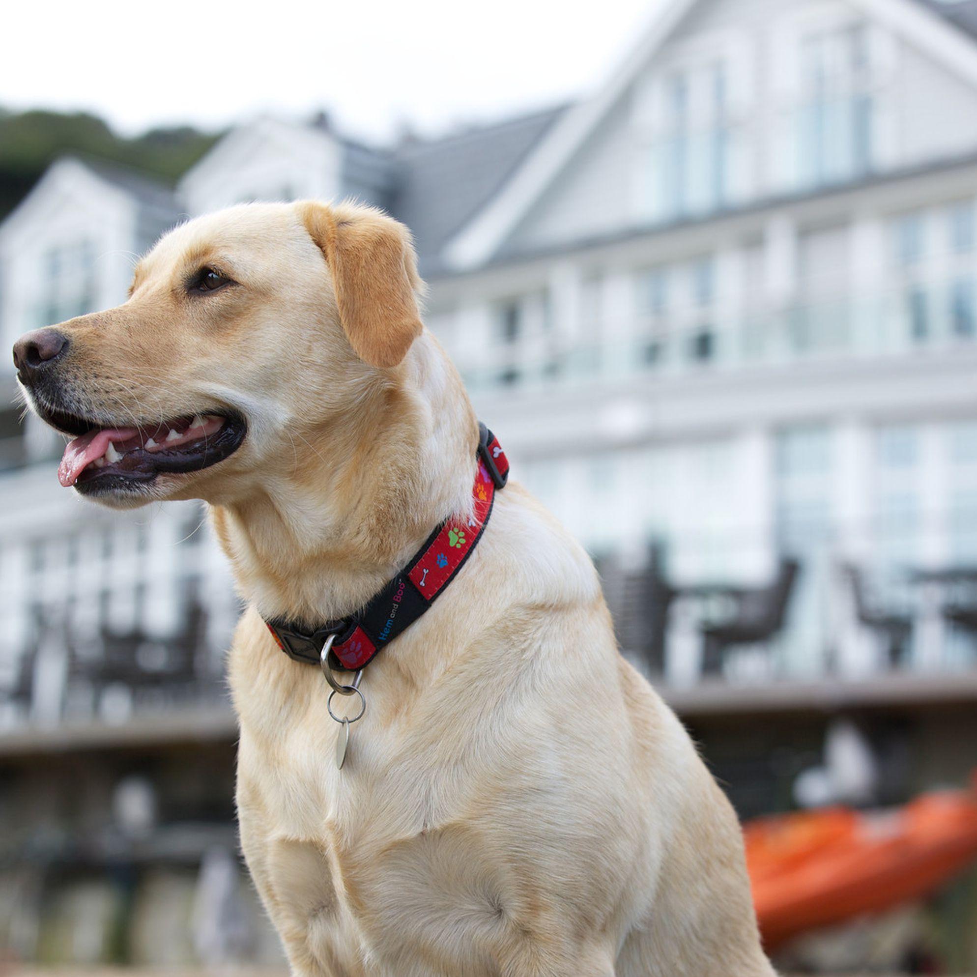 Dog-friendly holidays in Devon
