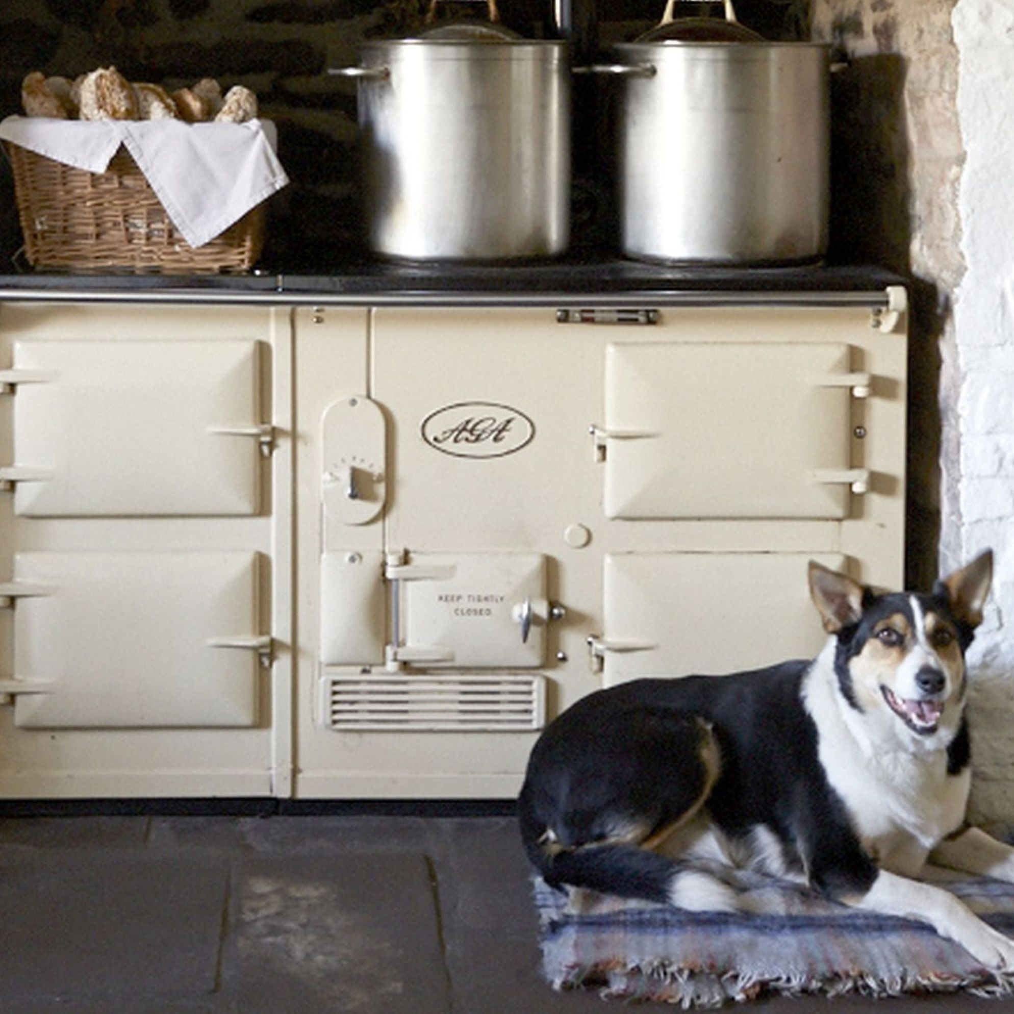 Dog-friendly holidays in Wales