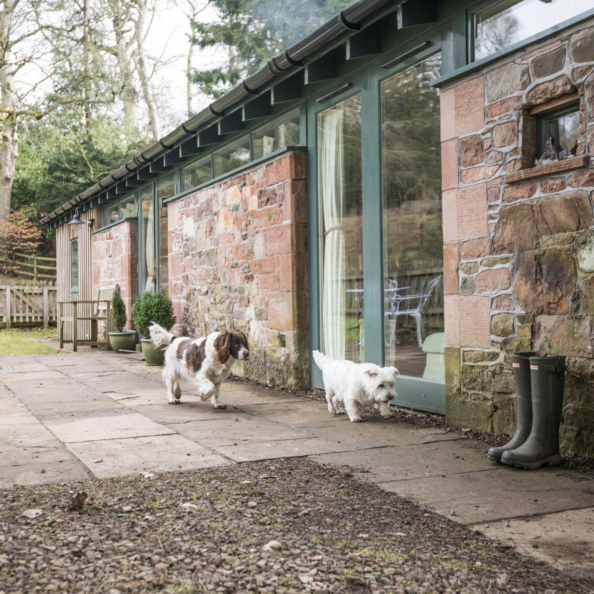 Dog-friendly holidays in Scotland