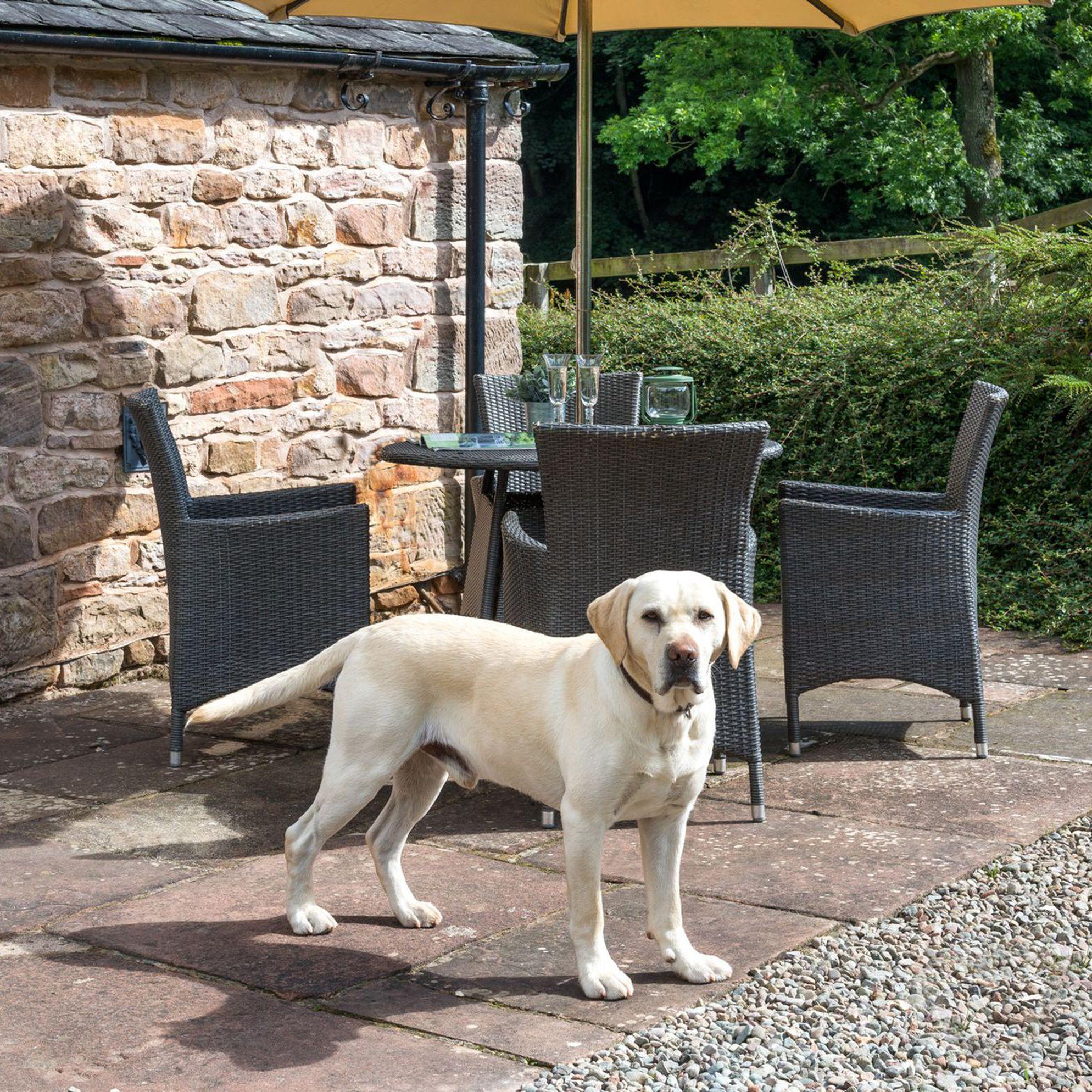 Dog-friendly holidays in Cumbria