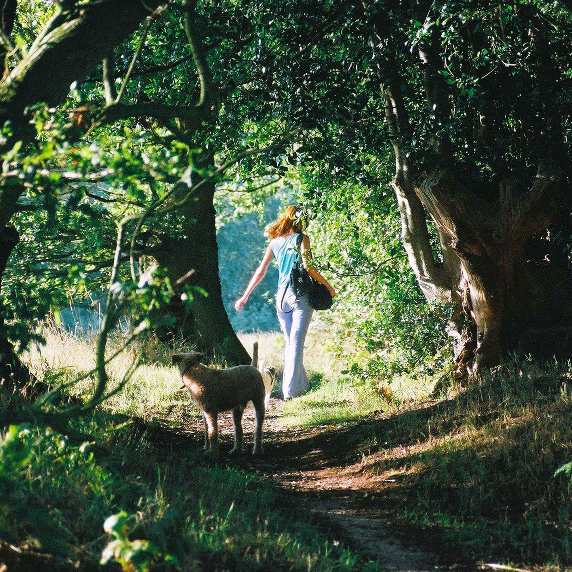 Dog-friendly holidays in Suffolk