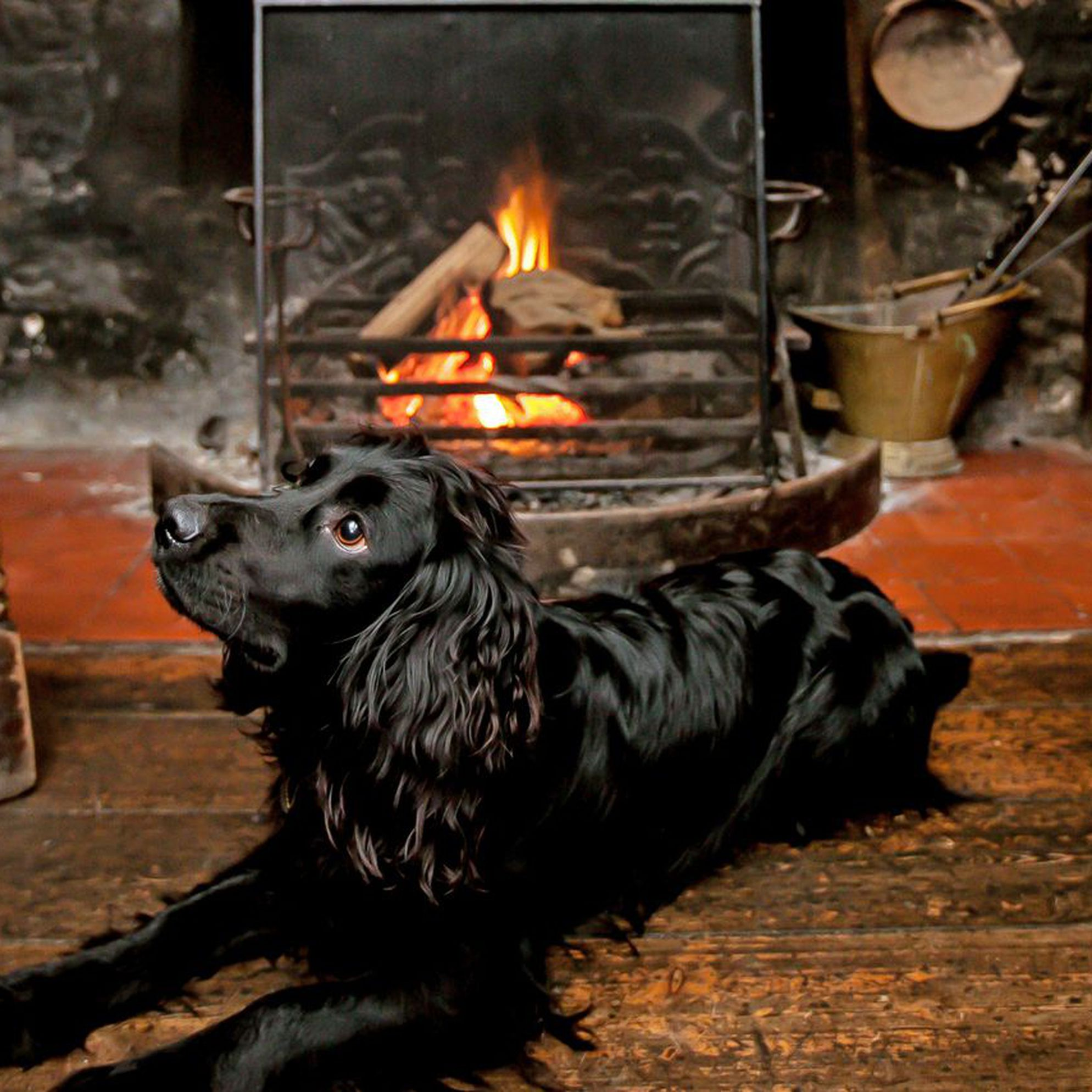 Dog-friendly pubs
