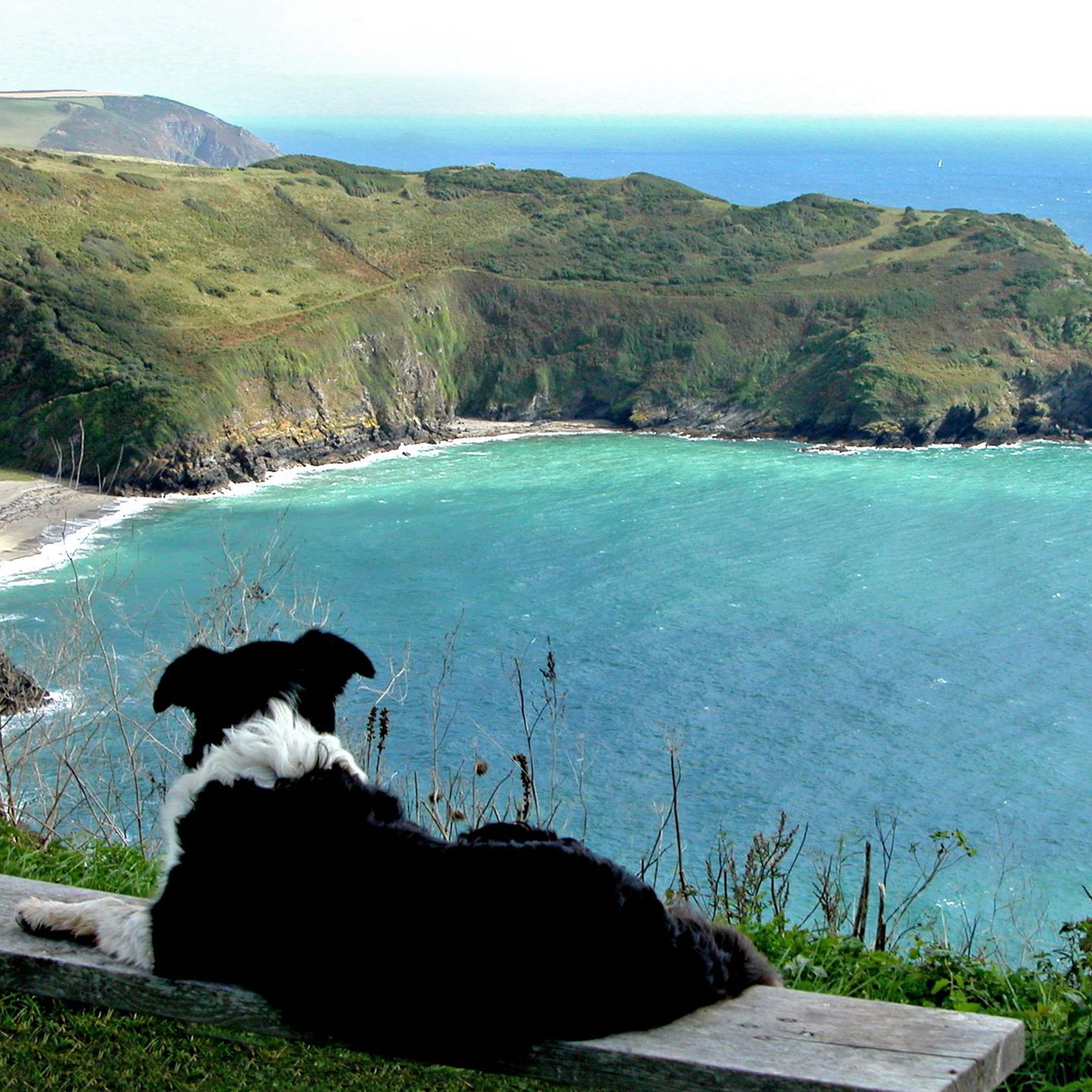 Dog-friendly large holiday cottages
