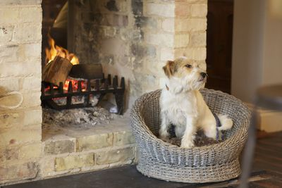 Dog-friendly breaks in Yorkshire