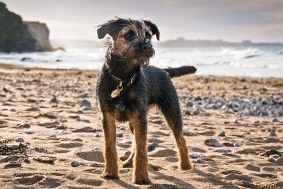 Dog-friendly cottages in Dorset