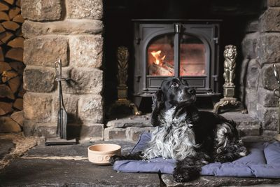 Dog-friendly holidays in the Cotswolds