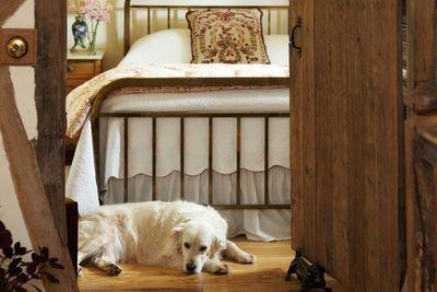 Dog-friendly B&Bs