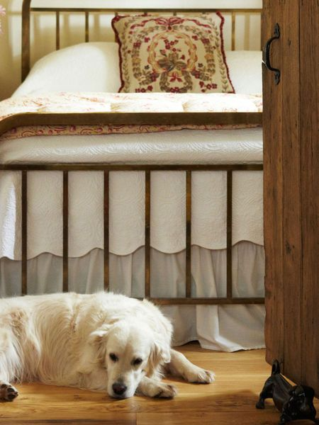 Dog-Friendly Cottages collection