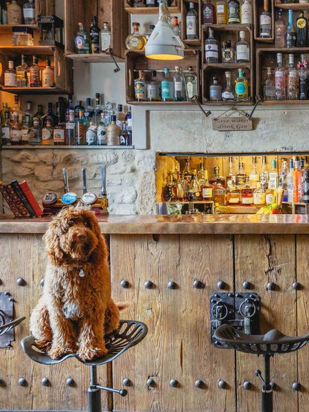 Dog-Friendly Hotels collection