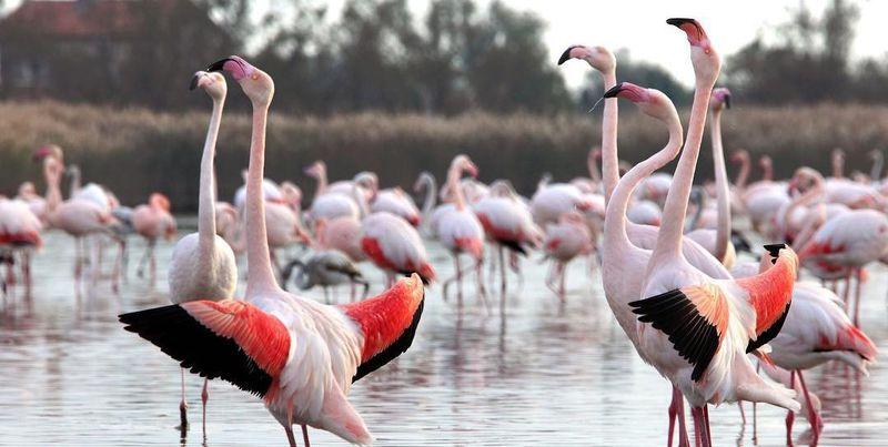 Europe's top wildlife experiences