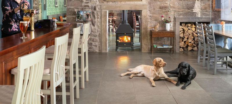Our top six dog-friendly places for special occasions