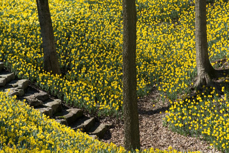 Best UK hikes for celebrating spring