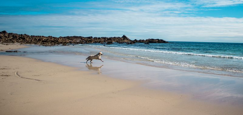 Our best dog-friendly beach breaks