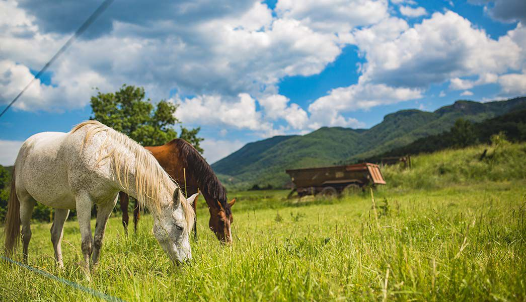 Horses grazing roadside in Catalonia