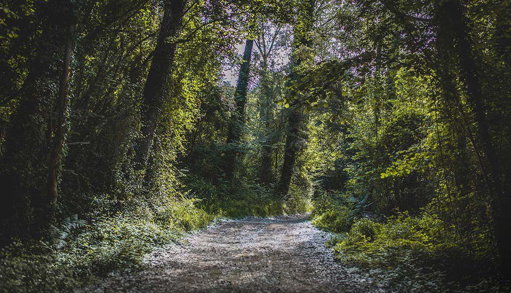 Forest near Olot, Catalonia